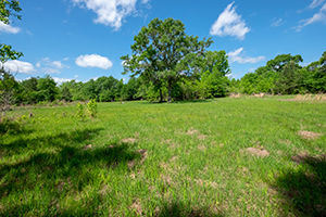 243 Acres Silsbee Former Ranch or Hunting Tract
