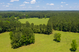 70 Acres Rolling Pasture Woods in the Pineywoods!