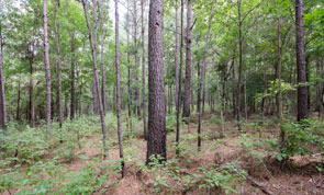 Piney Woods Hunting Tract near Woodville
